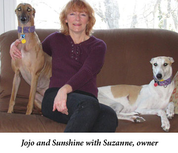 Pet Sitter With Greyhounds